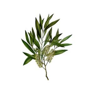 HE  de tea-tree bio