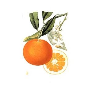 HE d'orange douce bio